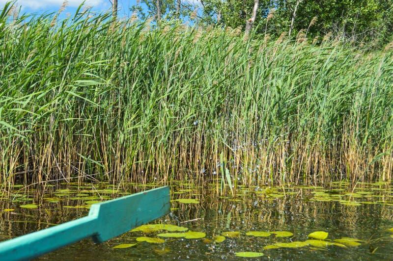 Деревянное зеленое весло для шлюпки на неторопливой прогулке на воде моря озера реки на природе на фоне зеленых растений стоковое изображение rf