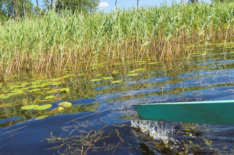 Деревянное зеленое весло для шлюпки на неторопливой прогулке на воде моря озера реки на природе на фоне зеленого растения стоковые фотографии rf