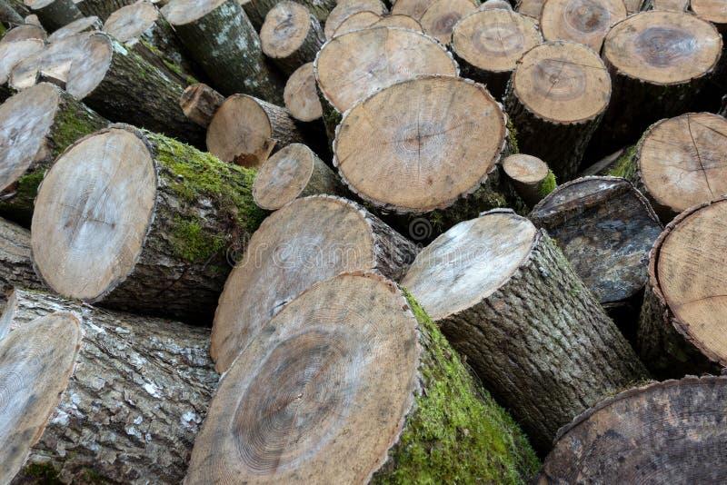 Деревянное хранение с disordered стволами дерева стоковая фотография