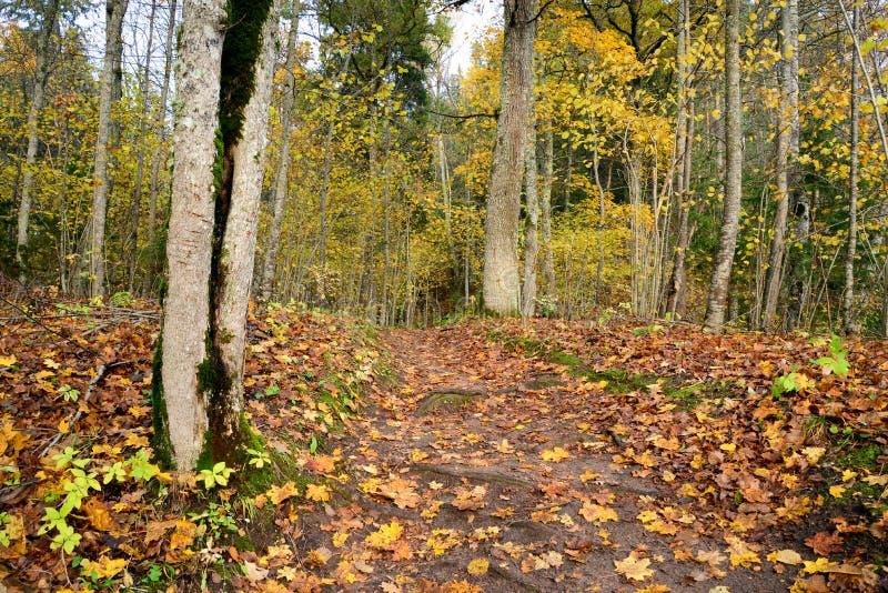 Деревянное passway в лесе стоковая фотография rf