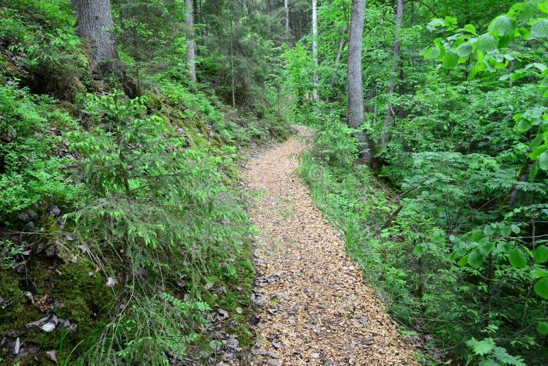 Деревянное passway в лесе Sigulda стоковое изображение