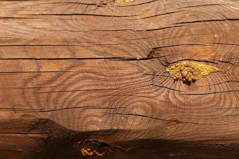 Деревянные балки : ( Horizonta деревянной стены бревенчатой хижины естественное покрашенное стоковая фотография rf