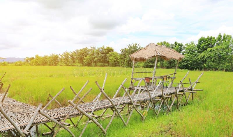 Деревянные бамбуковые рисовые поля скрещивания моста дорожки к хижине с лучами солнечного света стоковые фото