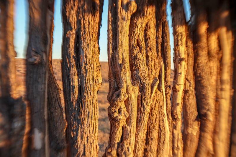 Деревянные ветви в солнечном свете стоковые фотографии rf