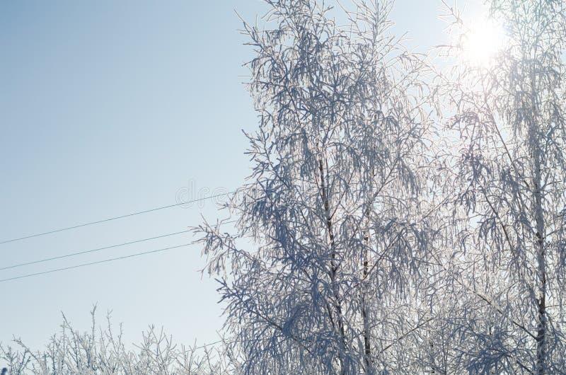 Деревянные ветви, покрытые белой морозой на голубом небе стоковые изображения rf
