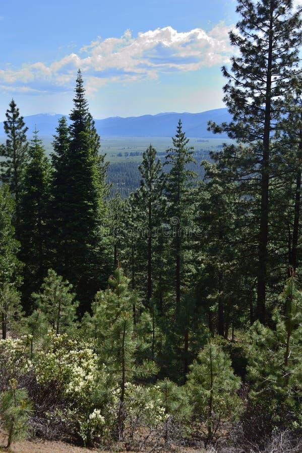 Деревянные воды головы реки приходят вверх в парк штата, Орегон и подачи Джексон Kimball вниз к озеру агенств Оно известный для стоковое изображение rf