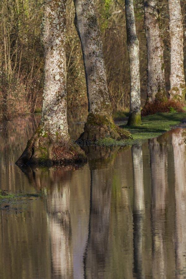 Деревянные водообильные отражения стоковое фото