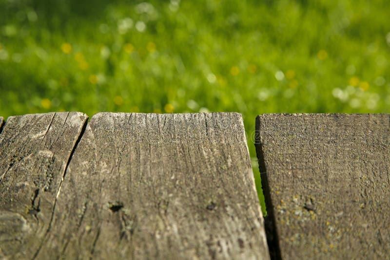 Деревянные доски и трава весны с маргаритками стоковые изображения rf
