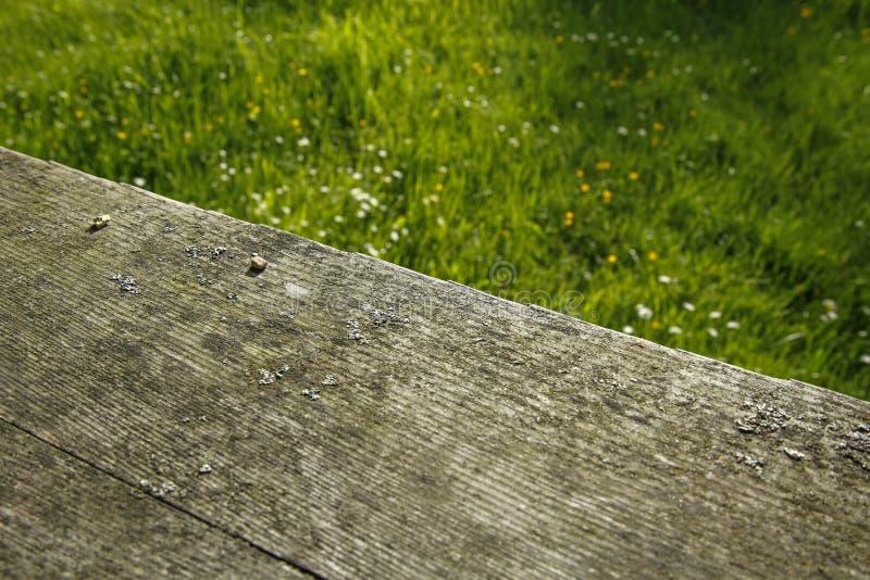 Деревянные доски и трава весны с маргаритками стоковое изображение