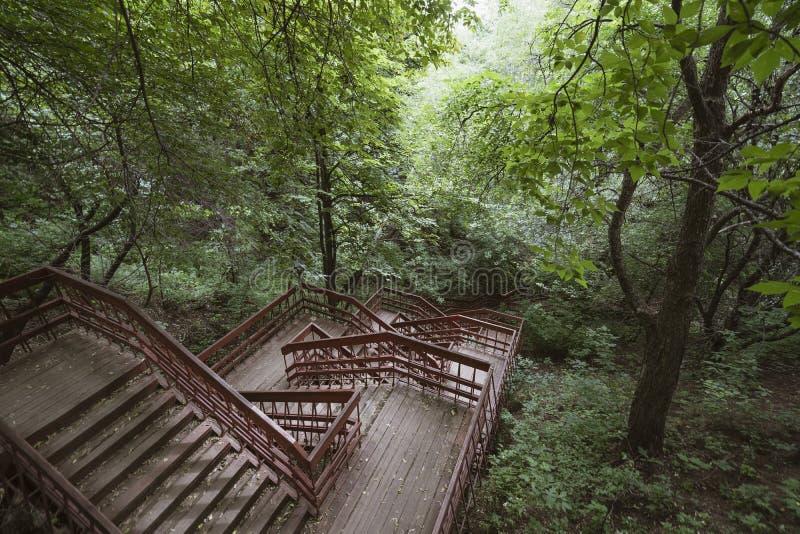 Деревянные лестницы в парке стоковые изображения