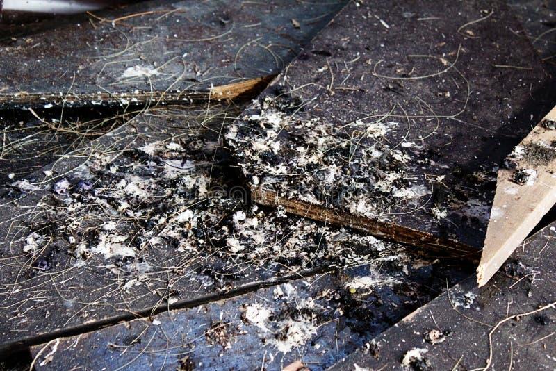 Деревянные планки покрытые с poo птицы стоковые изображения