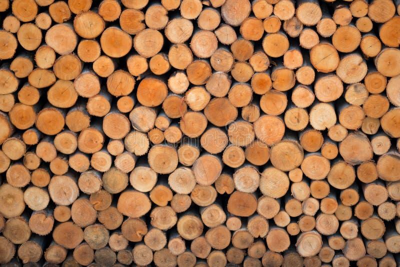 Деревянные пни закрывают вверх стоковое фото rf