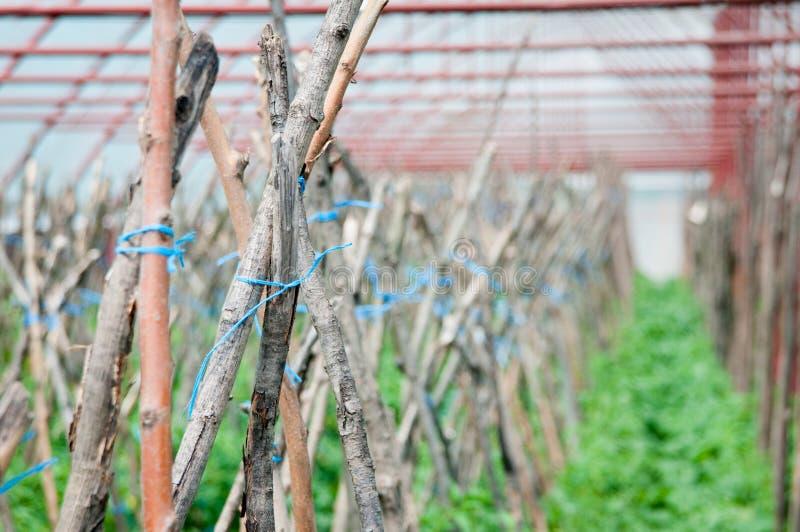 Деревянные поляки на плантации стоковое изображение