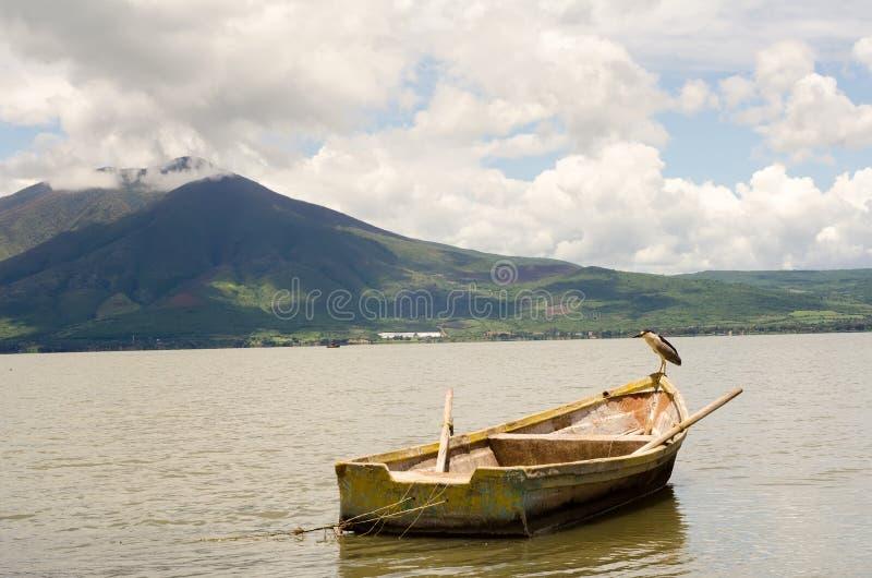 Деревянные рыбацкая лодка и водоплавающая птица стоковое фото rf