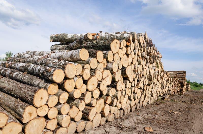 Деревянные стога топлива и журналы березы приближают к лесу стоковые изображения rf