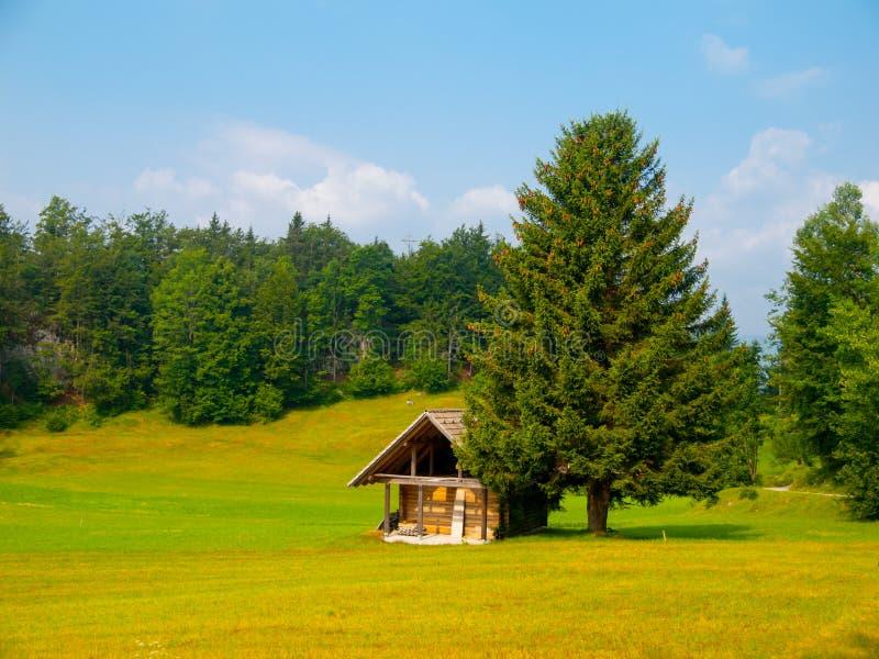 Деревянные хата и дерево в середине луга стоковые изображения rf