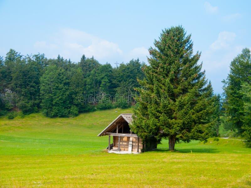 Деревянные хата и дерево в середине луга стоковая фотография