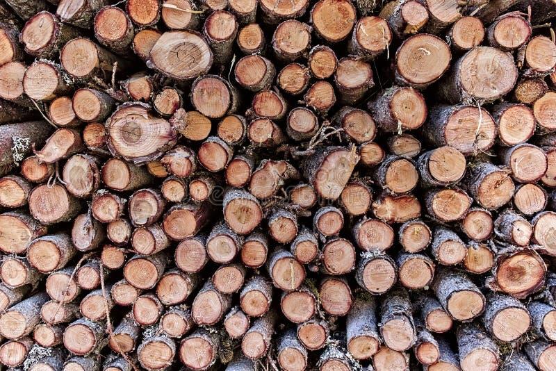 Деревянные штабелированные журналы, Gypsera стоковое изображение