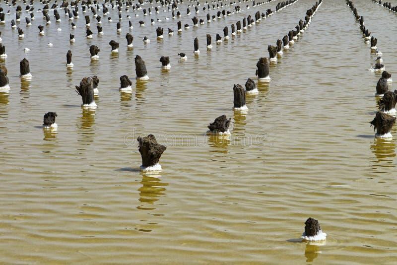 Деревянные штендеры на соляном baskunchak озера соли стоковые изображения rf
