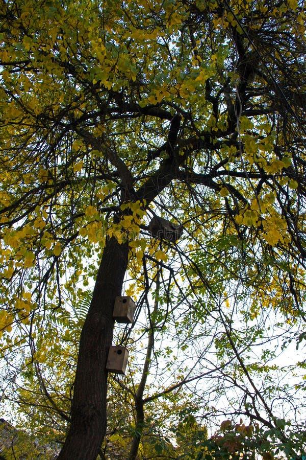 Деревянные birdhouses на дереве стоковое фото