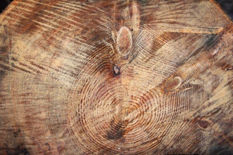 Деревянные spiers с стороной ` s лисы стоковые фотографии rf