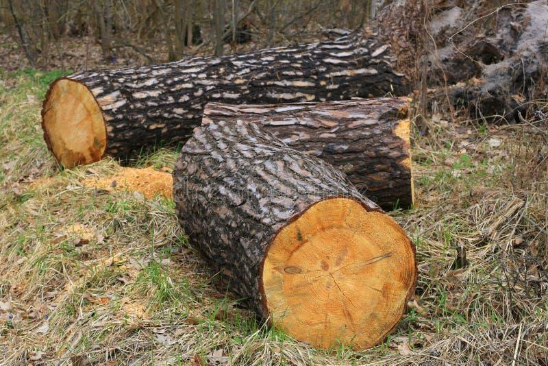 Деревянный входит в систему лес стоковое изображение