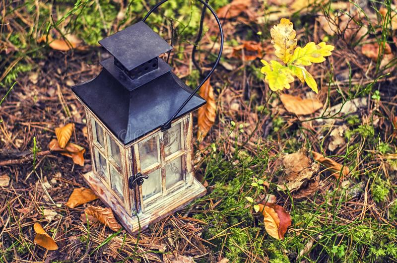 Деревянный декоративный электрофонарь на предпосылке леса стоковое фото rf