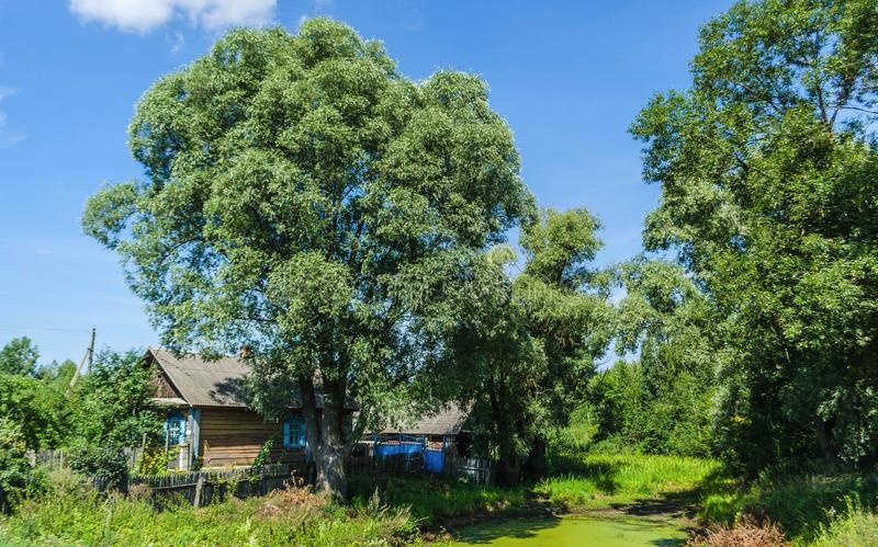 Деревянный дом в деревне среди садов зеленых деревьев стоковая фотография