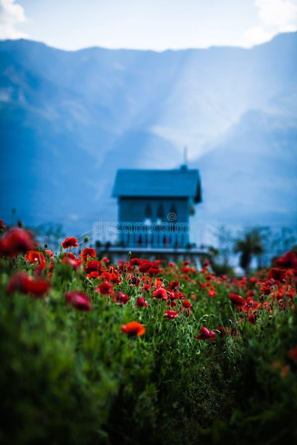 деревянный дом на поле мака против голубых гор в лете в Китае стоковая фотография rf