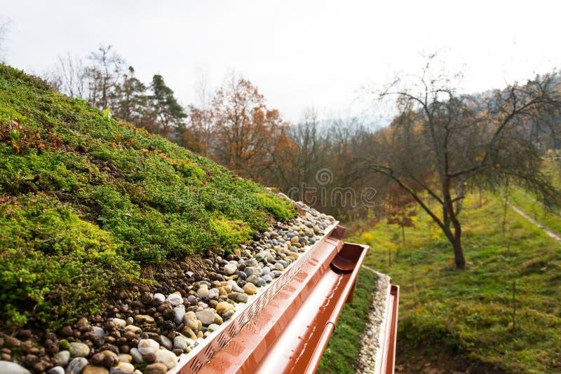 Деревянный дом при обширная зеленая живущая крыша предусматриванная с вегетацией стоковая фотография