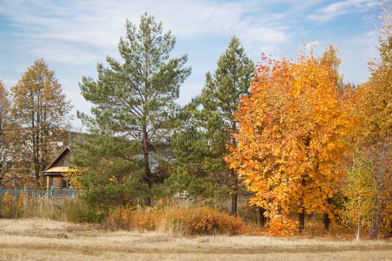 Деревянный дом стоит среди желтых деревьев и вечнозеленых сосен Сцена страны стоковая фотография