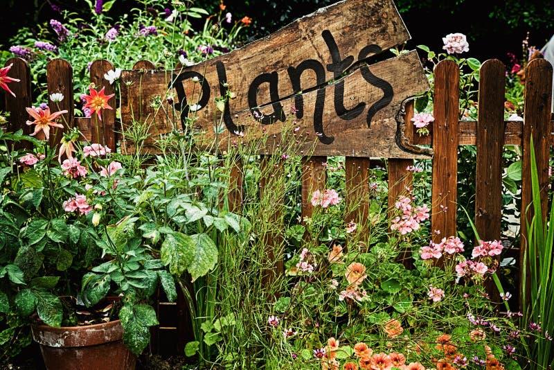 Деревянный завод подписывает внутри сад цветка стоковое фото