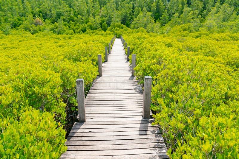 Деревянный идя путь над зеленой мангровой стоковые фотографии rf