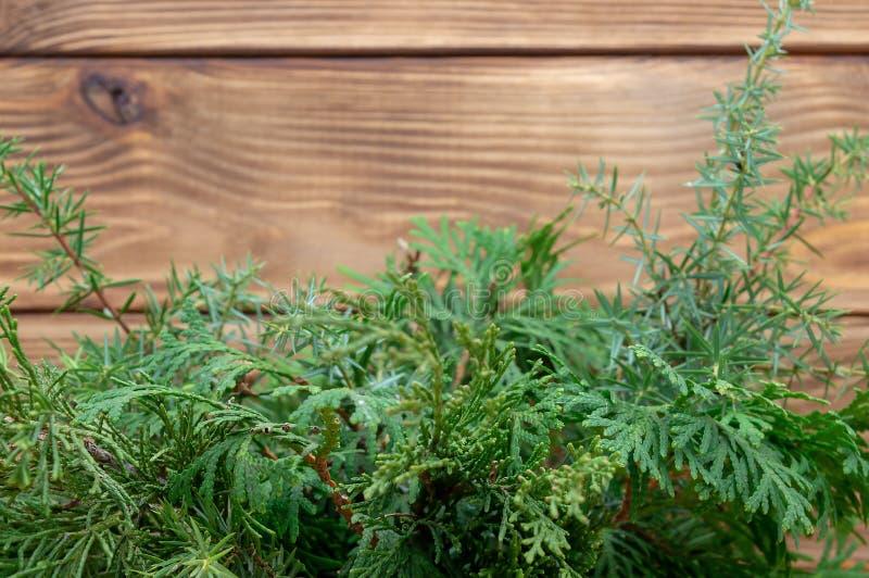 Деревянный кедр туи зеленого цвета открытки Нового Года предпосылки стоковые изображения rf