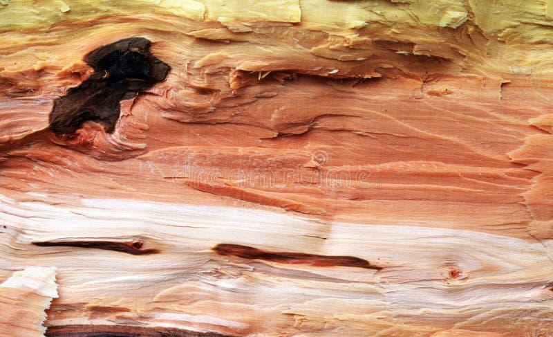 Деревянный макрос текстуры стоковые изображения rf