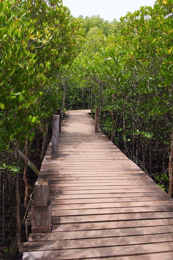 Деревянный мост для пути через естественный лес мангровы, для естественной предпосылки стоковое фото