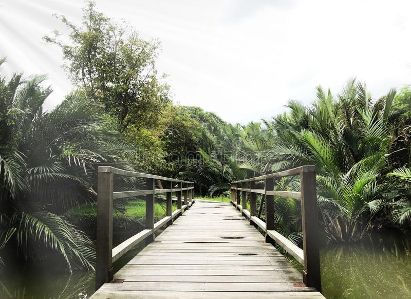 Деревянный мост и джунгли или парк в Bankok, Таиланде стоковые фотографии rf