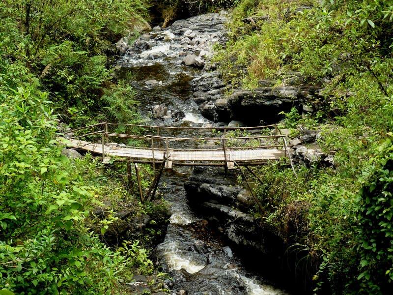 Деревянный мост над рекой в джунглях стоковое фото rf