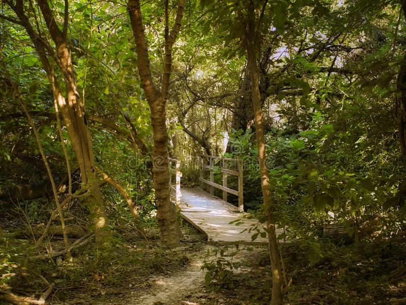 Деревянный мост через лес стоковое фото