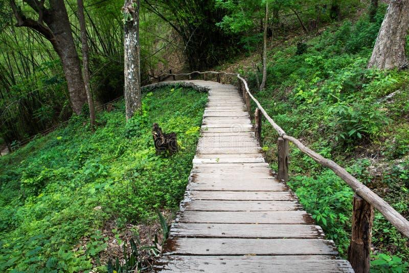 Деревянный наклон вниз с дорожки с поручнем в джунглях стоковое фото