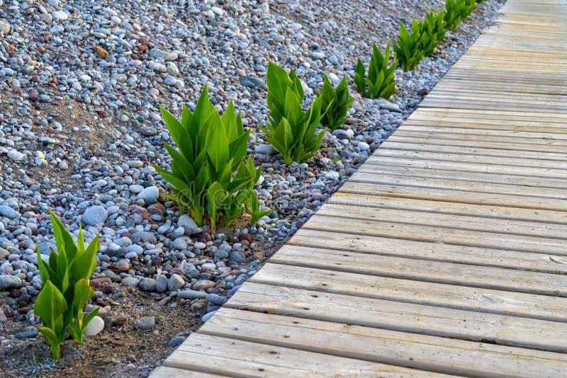 Деревянный настил на Pebble Beach стоковое изображение rf