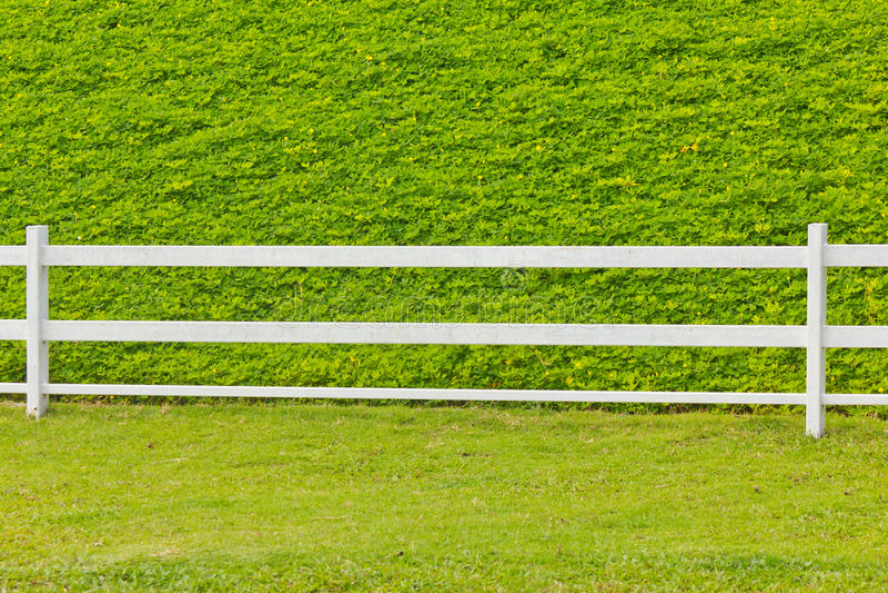 Деревянный обнести трава. стоковое изображение