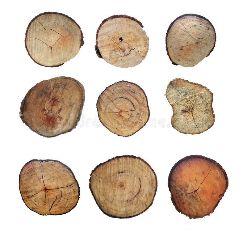 Деревянный пень изолированный на белой предпосылке Дерево круглого отрезка вниз с ежегодными кольцами как деревянная текстура стоковое фото rf