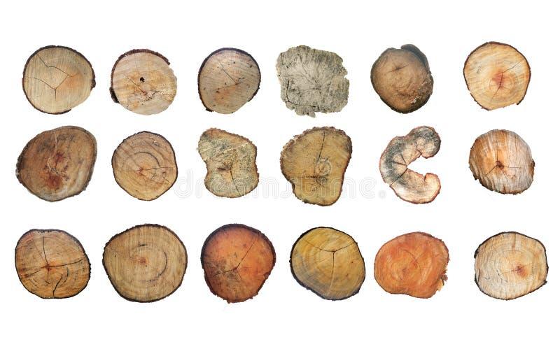 Деревянный пень изолированный на белой предпосылке Дерево круглого отрезка вниз с ежегодными кольцами как деревянная текстура стоковое изображение rf