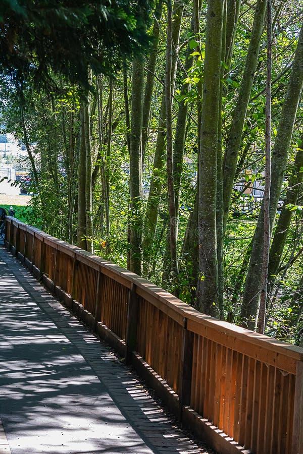 Деревянный пешеходный мост над прудом со стволами дерева и листьями березы стоковое изображение