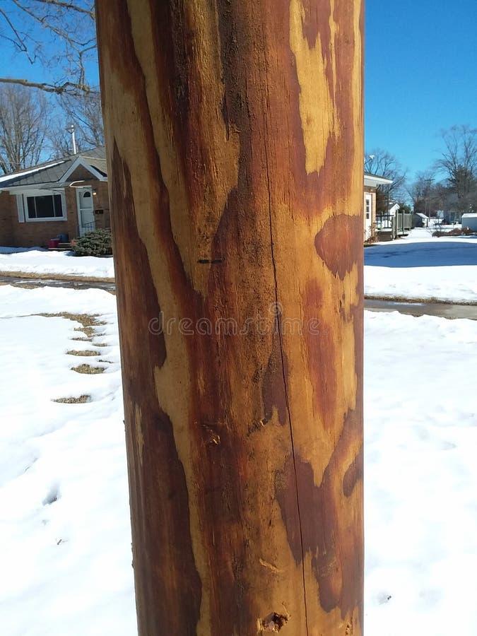 Деревянный поляк стоковые фото