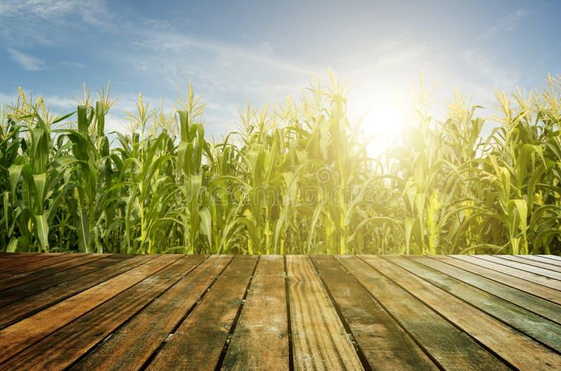 Деревянный пол на кукурузном поле стоковая фотография