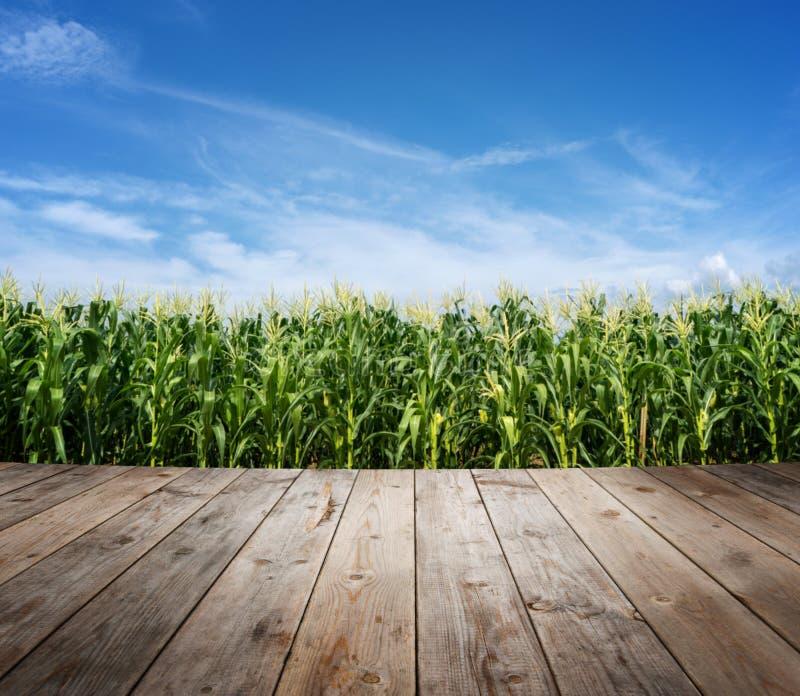 Деревянный пол на плантации кукурузного поля стоковая фотография