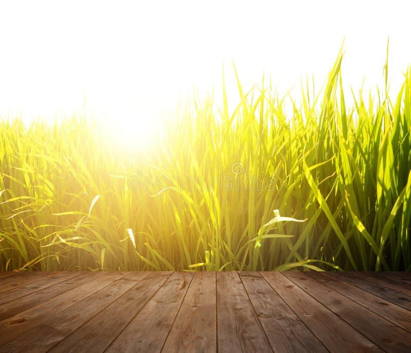 Деревянный пол на поле неочищенных рисов стоковые изображения