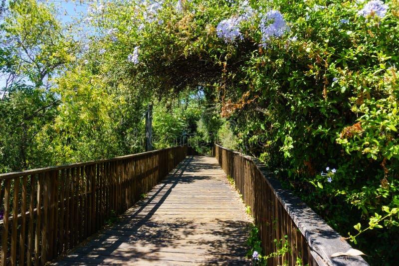 Деревянный променад, часть следа заводи Лос Gatos в городке Лос Gatos, южной области San Francisco Bay стоковое фото rf